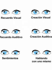 El sistema ocular