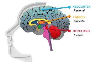 Un poco de neurociencia